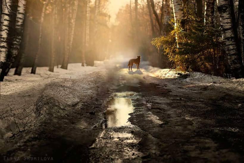 Photography: Elena Shumilova