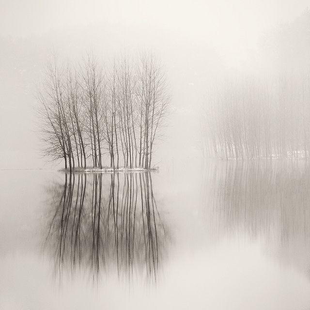 fotografía de una pantano con niebla y un árbol